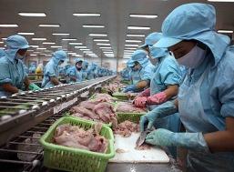 Giá cá tra tăng mạnh