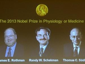 Ba nhà khoa học Mỹ và Đức đoạt giải Nobel Y học 2013