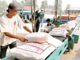 Giá lúa gạo ĐBSCL tuần qua tăng mạnh 200 đồng/kg