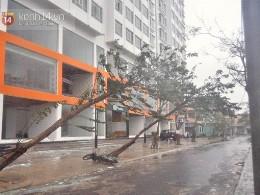 Những hình ảnh về sự tàn phá kinh hoàng của bão số 11 tại Đà Nẵng