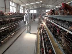 Cúm H7N9 nguy cơ quay lại Trung Quốc