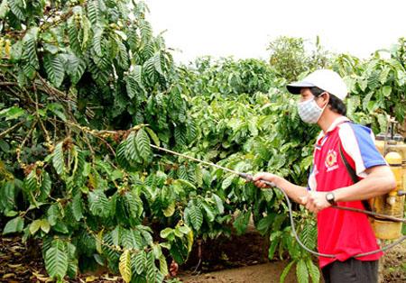Việt Nam sẽ duy trì sản lượng cà phê dù giá giảm mạnh