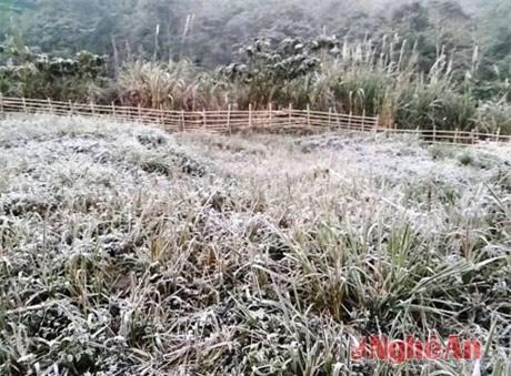 Nghệ An bất ngờ có tuyết do không khí lạnh