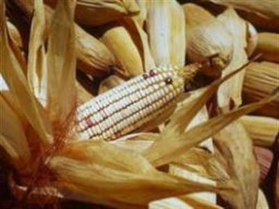 Chỉ số giá lương thực của FAO tăng cao nhất trong gần 1 năm qua