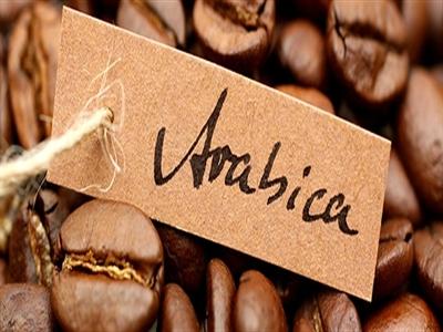Giá cà phê Tây Nguyên xuống 40,8 triệu đồng/tấn