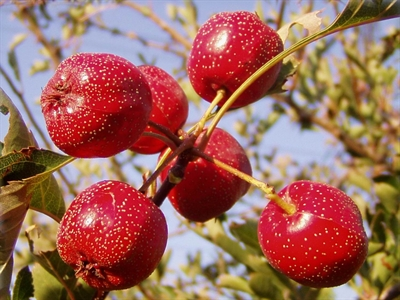 8 loại rau, quả Trung Quốc có hóa chất vượt ngưỡng cho phép