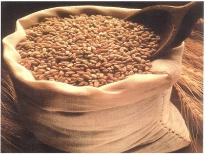 IGC giảm dự báo sản lượng lúa mỳ thế giới do khô hạn tại Mỹ