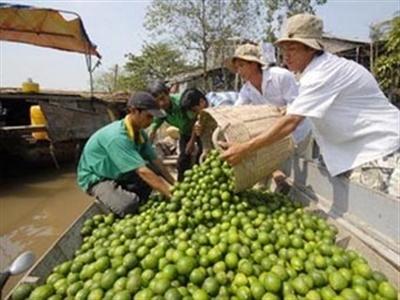 Chanh mất giá mạnh do Trung Quốc ngừng mua