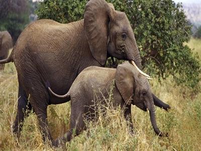 Sắp có Công viên động vật hoang dã quy mô hơn 7 nghìn tỷ đồng