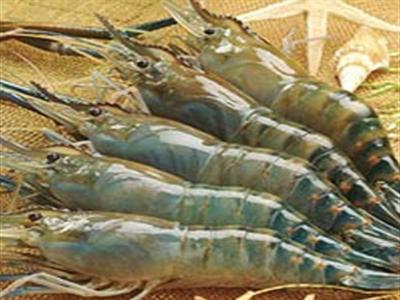Kiến nghị miễn thuế nhập khẩu nguyên liệu thủy sản
