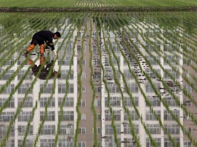 Hàn Quốc đối mặt tình trạng thừa cung gạo trong năm nay