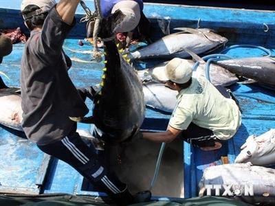 Công bố quy hoạch trung tâm dịch vụ hậu cần nghề cá Sa Kỳ