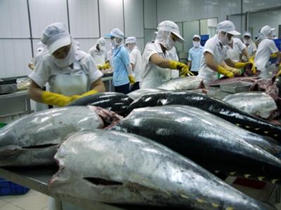 Cá ngừ Việt thấy đường sang Nhật?