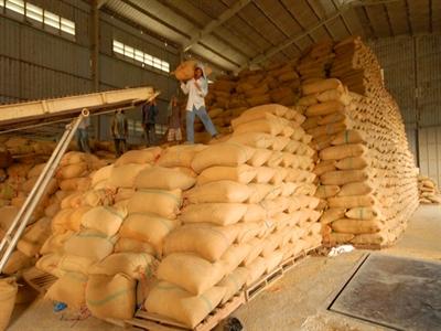 Nhìn lại tạm trữ lúa gạo vụ đông xuân