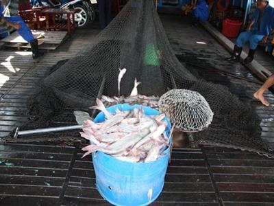 Giải bài toán giá cá tra ở ĐBSCL