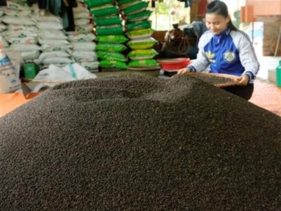 Xuất khẩu nông sản 6 tháng đầu năm: Không quá tệ!