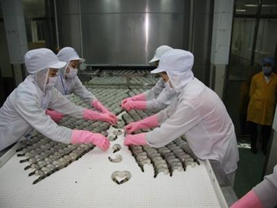 Việt Nam vẫn dẫn đầu về xuất khẩu tôm sang Nhật