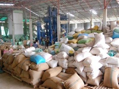 Xuất khẩu gạo của Campuchia giảm do nhu cầu yếu và giá tăng
