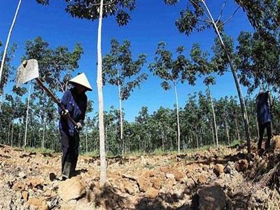 Việt Nam thí điểm cho nông dân góp vốn bằng đất