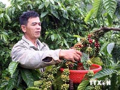 Nâng cao giá trị sử dụng chỉ dẫn địa lý cà phê Buôn Ma Thuột