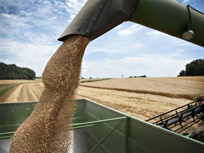 Trữ lượng ngũ cốc toàn cầu đạt mức cao nhất 15 năm qua