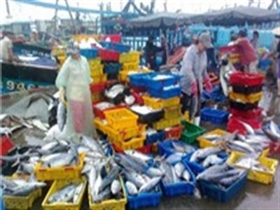 Thủy sản khai thác biển 6 tháng tăng 5,5%