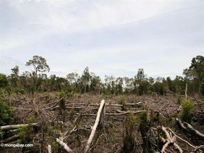 Indonesia cần 5 tỷ USD để giảm phát khí thải CO2