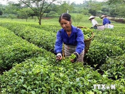 Thúc đẩy khu vực tư nhân tham gia phát triển chuỗi giá trị nông nghiệp