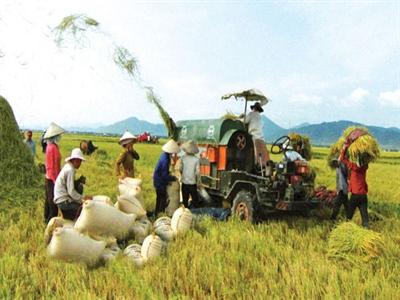 Để tái cơ cấu ngành lúa gạo: Cần thể chế tốt mở đường
