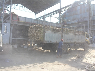 Cần tiếp tục cho xuất khẩu đường