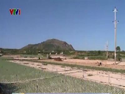 Lý Sơn: Nguy cơ mất mùa hành do khô hạn