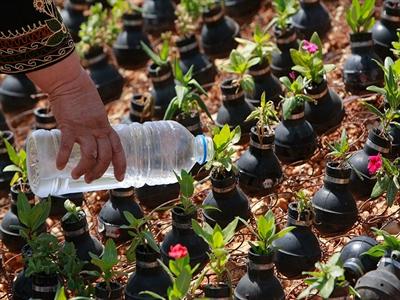 Người Palestine trồng hoa trong vỏ đạn