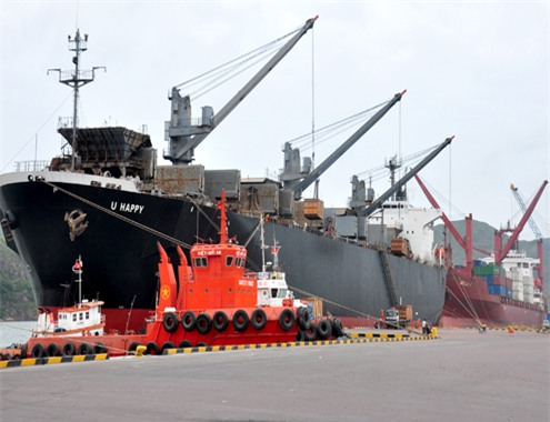 Bình Định dừng xuất khẩu dăm gỗ từ năm 2015