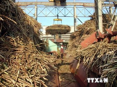 Tìm giải pháp giảm giá thành trong sản xuất mía đường