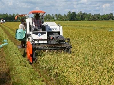 Tổn thất sau thu hoạch lúa 13.700 tỉ đồng mỗi năm