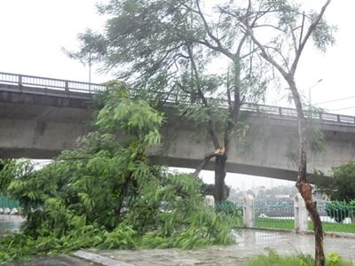 Bão Thần Sấm cấp 14 đổ bộ vào Quảng Ninh