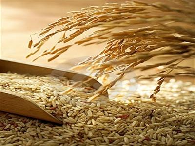 Ủy ban Codex ra quy định mới về hàm lượng asen trong gạo