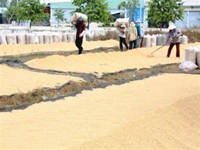 Xuất khẩu gạo sẽ tăng trong những tháng cuối năm