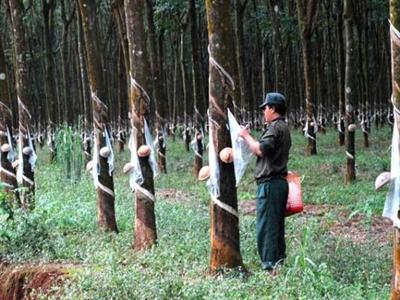 Cao su Đồng Phú: Lợi nhuận 6 tháng giảm 50% so với cùng kỳ