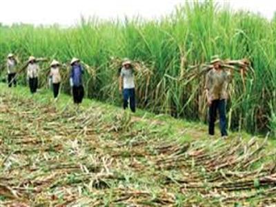 Thành Thành Công Tây Ninh: 6 tháng lãi 62 tỷ đồng, giảm 30% so với cùng kỳ