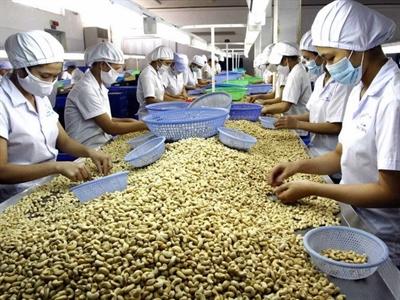 Xuất khẩu hạt điều của Đồng Nai tăng cả về lượng và giá trị