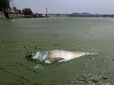 Trung Quốc đối mặt với ô nhiễm nước nặng nề
