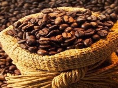 Đầu tháng 8, giá cà phê bất ngờ bùng nổ