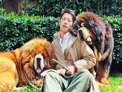 Báo Trung Quốc: Trào lưu nuôi chó cảnh là ngoại lai và đáng bị lên án