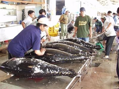 Xuất khẩu chuyến cá ngừ đầu tiên sang Nhật Bản