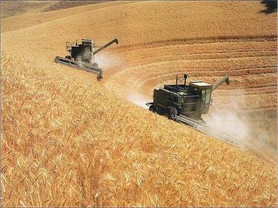 Giá lúa mỳ giảm do đặt cược xung đột Ukraine không gây gián đoạn thương mại