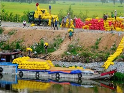 Xuất khẩu gạo tiểu ngạch sang Trung Quốc: Tiềm ẩn nhiều rủi ro