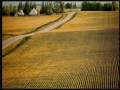 Sản lượng ngô, đậu nành Mỹ dự báo đạt kỷ lục