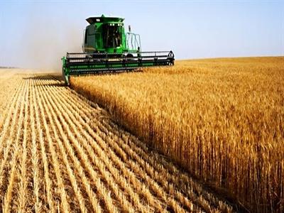 Giá lúa mỳ giảm phiên thứ 4 trước khi USDA ra báo cáo về mùa vụ Mỹ