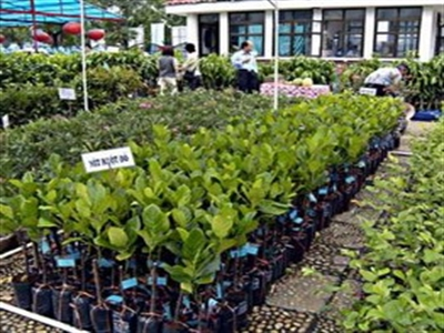 Giống cây trồng miền Nam đăng ký bán hết cổ phiếu quỹ